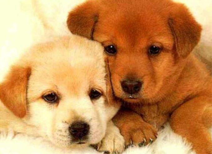 Ad Altopascio il 1° Dog Day Show, festa per gli amanti degli animali