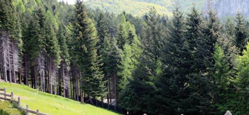 30 aprile – 3 maggio, al via le quattro giornate formative dell'Associazione Universitaria Studenti Forestali di Torino tra Alpi Apuane e Appennino Tosco Emiliano