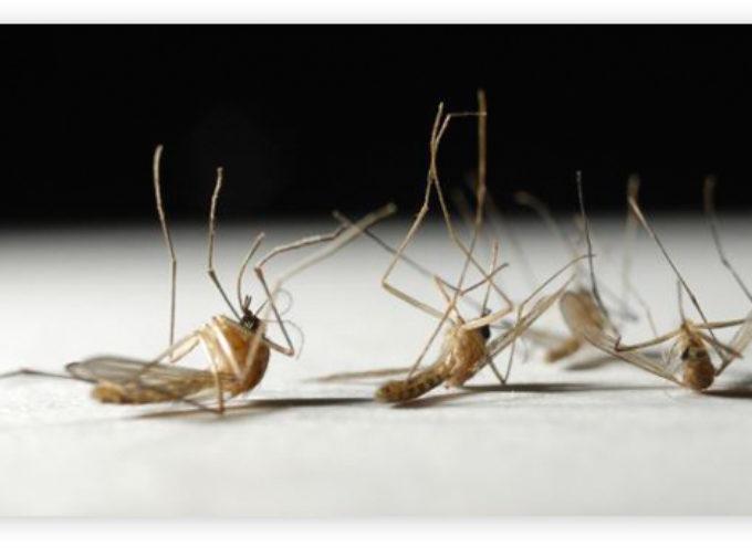 Zanzare: provvedimenti per la prevenzione e il controllo dell'infestazione