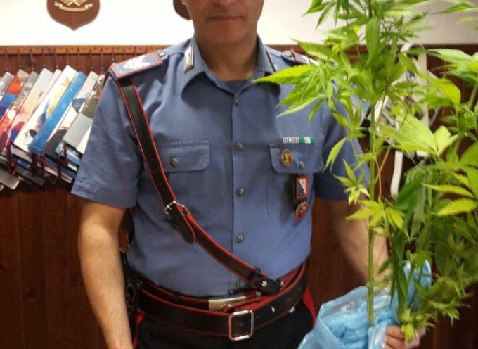 Denunciato muratore con hascisc e piante di marijuana in casa