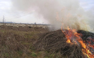 Ramaglie-bruciate