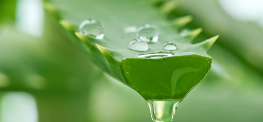 Aloe Ferox succo
