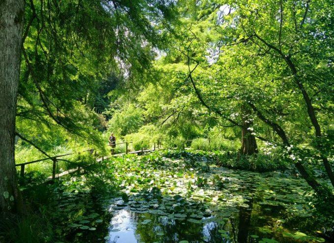 """Prima serata con """"Il canto degli Alberi"""" all'Orto Botanico"""