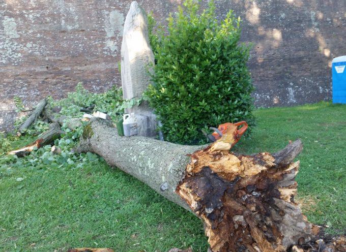 Pioggia e vento: un tiglio cade dagli spalti delle Mura sul monumento dedicato a Don Aldo Mei. Nessun danno grave