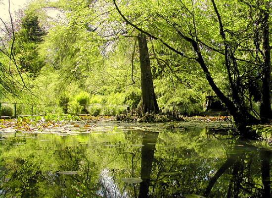 """""""Il canto degli alberi"""": un altro venerdì in musica all'Orto Botanico"""