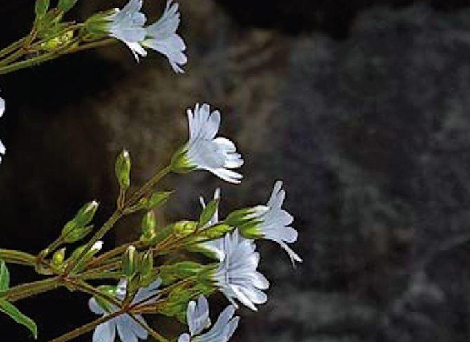 """""""Apuane in fiore, luci e colori"""" una mostra fotografica all'Orto Botanico"""