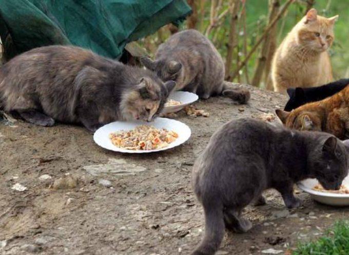 Colonie feline: effettuata la mappatura richiesta dalle normative vigenti