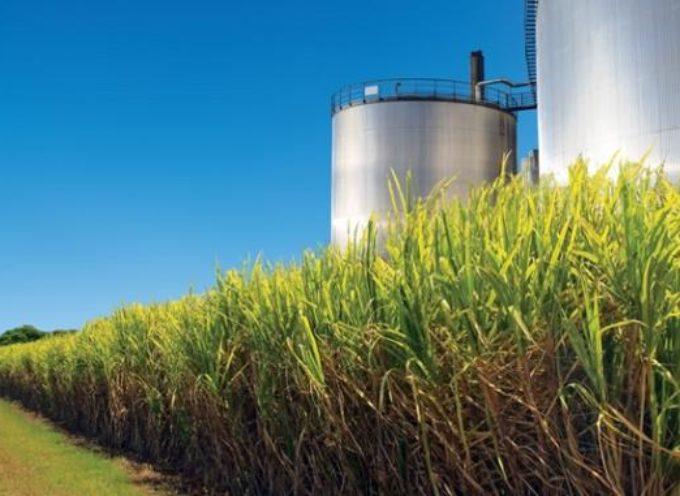 Energia: il futuro è nella bioenergia, elettricità da paglia, alghe e scarti agroindustriali
