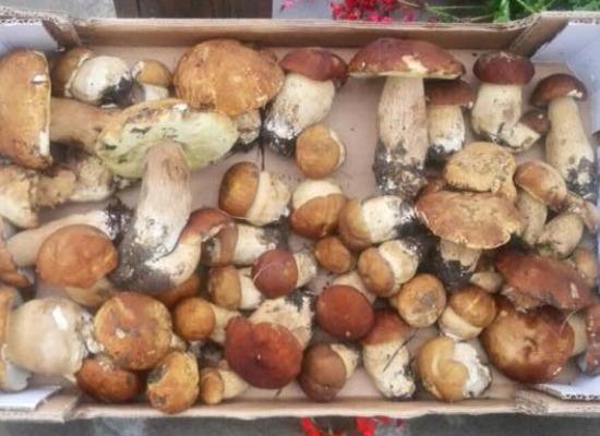 Trovano i funghi in Garfagnana e non solo. . .