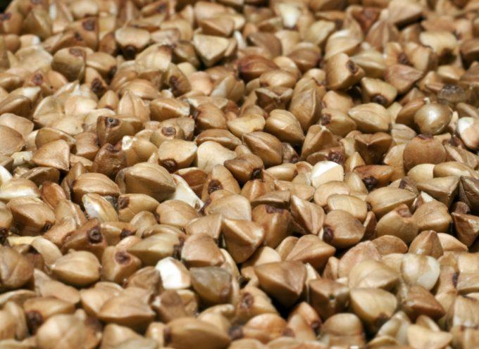 Siamo sicuri che il grano saraceno abbia origini Valtellinesi e non Garfagnine?