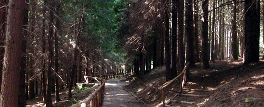 Seminario residenziale presso La Riserva Naturale Statale dell'Orecchiella
