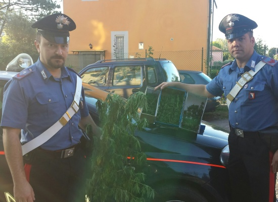 Ennesimo arresto per coltivazione di marijuana
