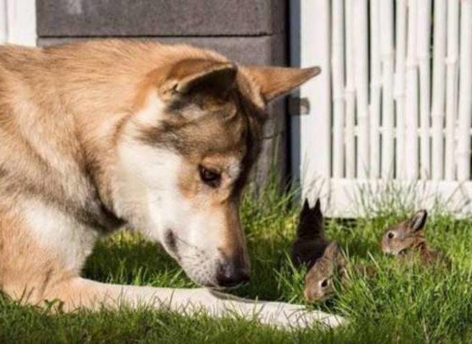 Orrore a Trassilico: cane massacrato senza pietà