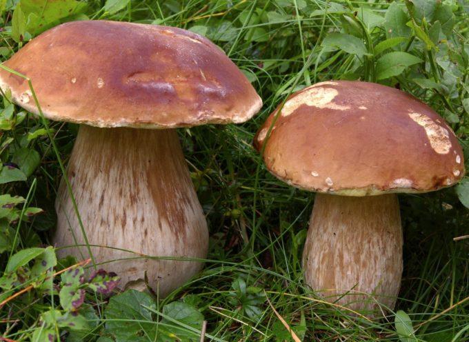 Aspettando la prossima nascita dei funghi per un settembre super