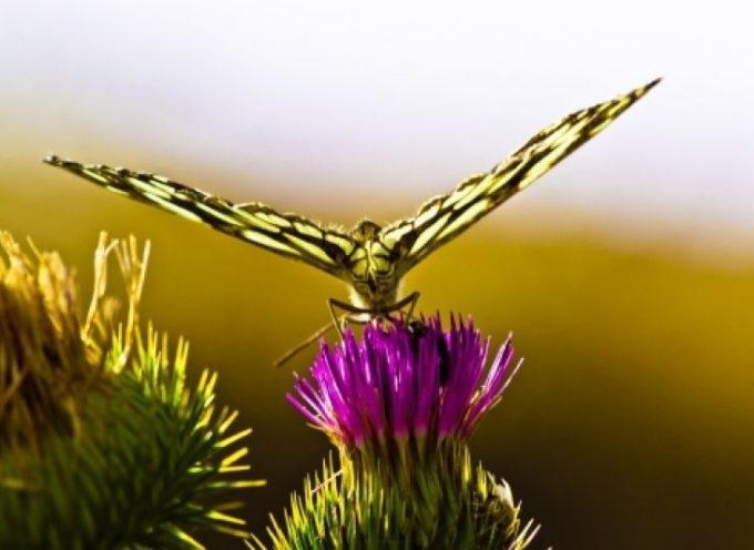 Il Volo della Farfalla a Bagni di Lucca