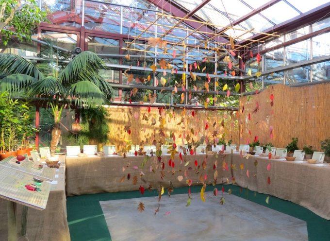 Una mostra 'tattile' sui frutti selvatici all'Orto botanico di Lucca