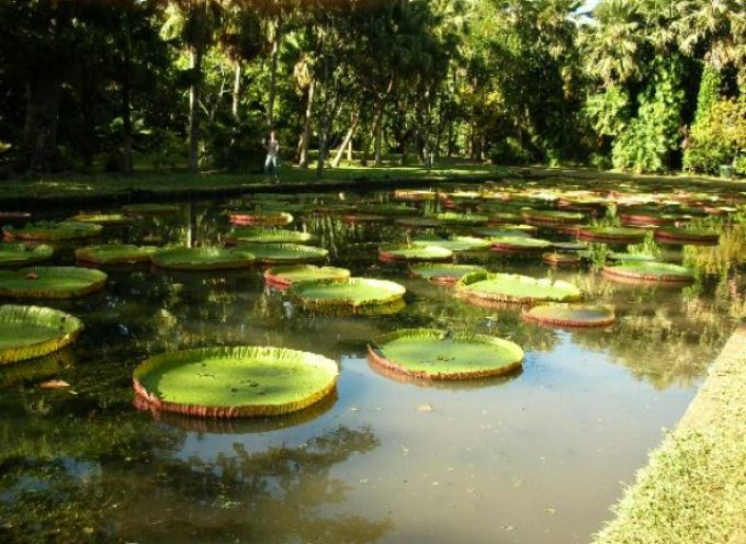 Un corso di coltivazione di orchidee all'Orto Botanico di Lucca