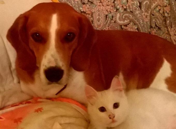 Attenzione è scomparso Ettore, un canino di tre anni.