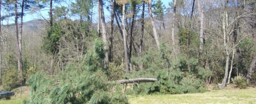 """Allarme boschi in Toscana, Fedagri: """"Tra calamità e burocrazia una morte annunciata"""""""