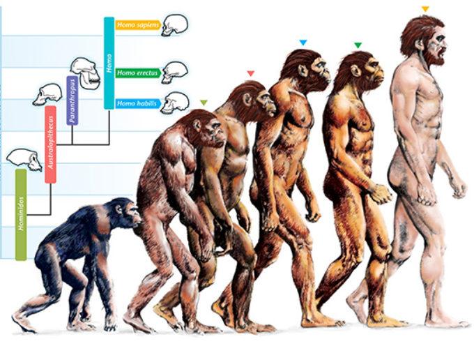 """ACCADDE OGGI : 24 Novembre 1859, Darwin pubblica: """"L'origine della specie"""""""