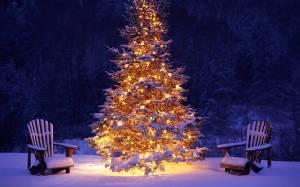albero-natale-vero