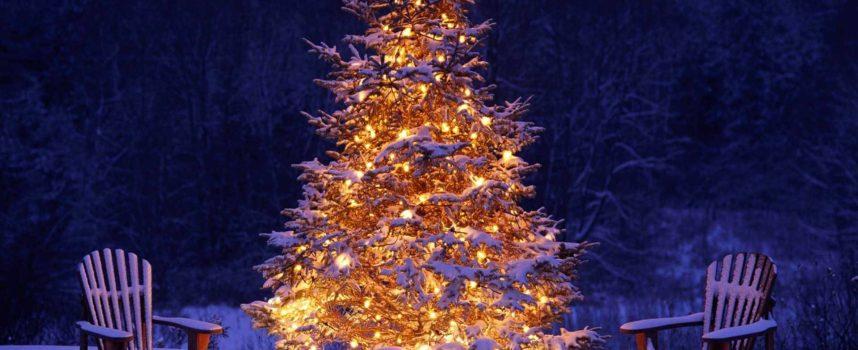 A dicembre è tradizione decorare l'albero di Natale,