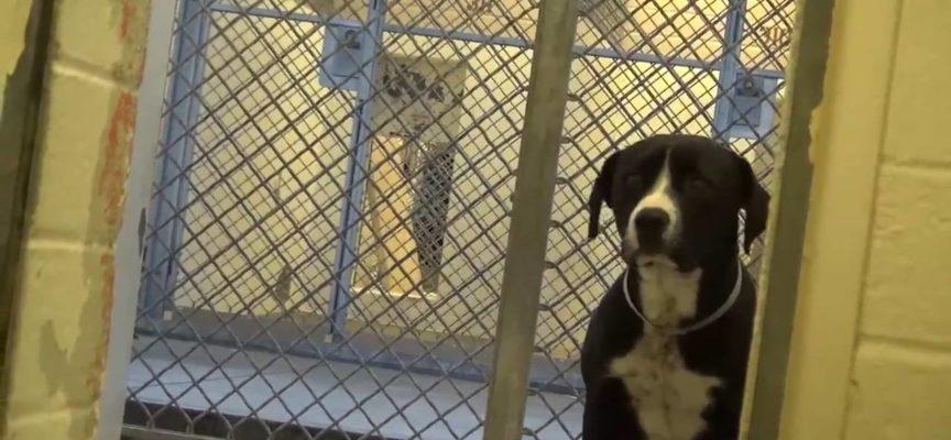 Questa è la felicità di un cane chiuso in canile, quando capisce che sarà adottato