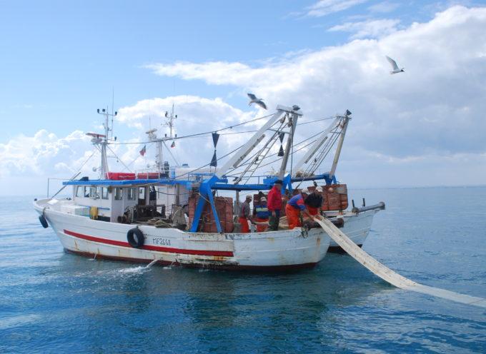 Percorsi di valorizzazione del pescato della Costa Toscana:  dalla creazione di un sistema di tracciabilità   allo sviluppo di un marchio