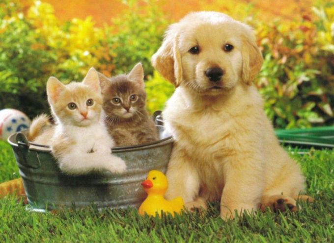 Missione Raccolta cibo – per aiutare le colonie feline del territorio