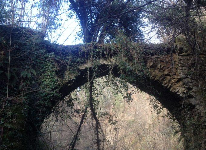 Un ponte nascosto dalla natura che ospita una pianta proprio sopra l'arcata ( è il ponte della Taverna)