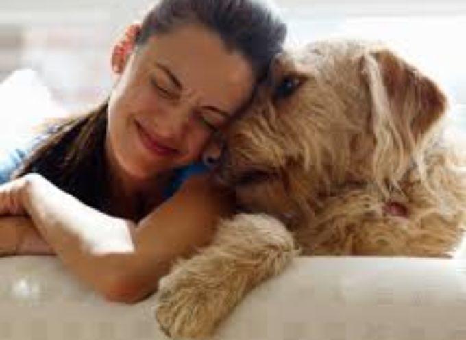 Come ci dimostra affetto il nostro cane?