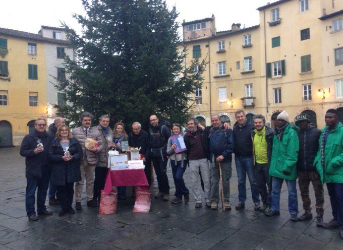 I 1000 messaggi dell'abete di piazza Anfiteatro si mettono in viaggio per Roma