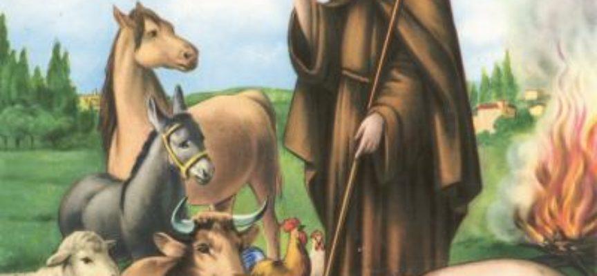 FESTA DI SANT'ANTONIO ABATE: LA NOTTE IN CUI GLI ANIMALI 'PARLANO'