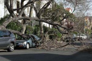 2483718-auto-intrappolati-sotto-albero-caduto-dopo-la-tempesta-di-vento-los-angeles-california