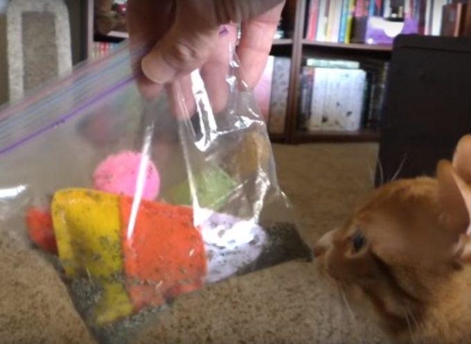 Se Hai Un Gatto In Casa, Questi 5 Trucchetti Possono Tornarti Molto Utili