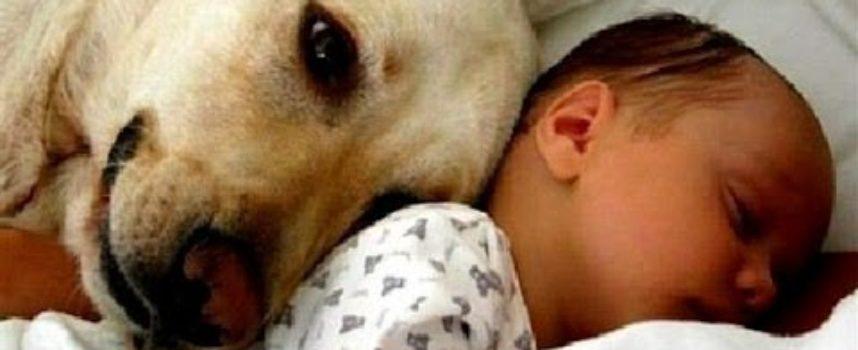 Il primo incontro di Cani, Gatti con i bambini appena nati…