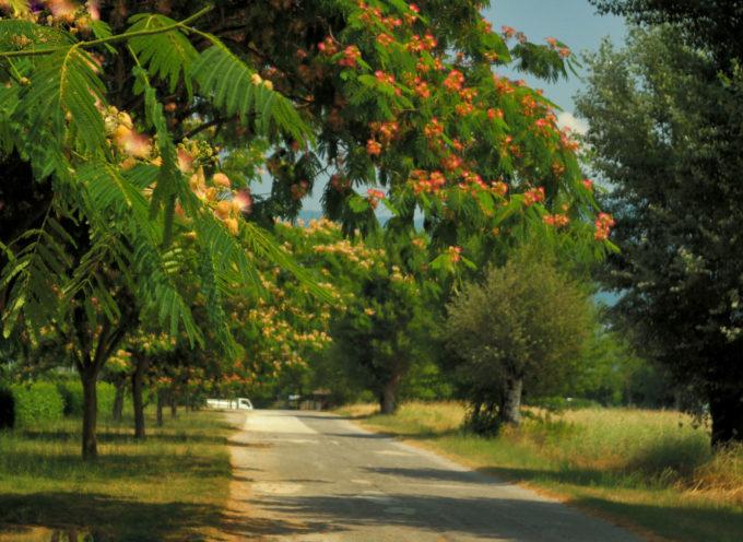 """un paesaggio campestre vicino ai Laghetti """"Isola Bassa"""" a Lammari, lo scatto di Claudia Cruz che ha vinto il challenge fotografico"""