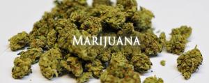 Learn-About-Marijuana