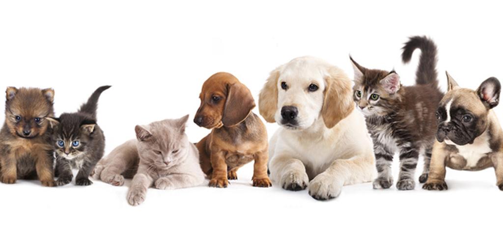 amici-animali
