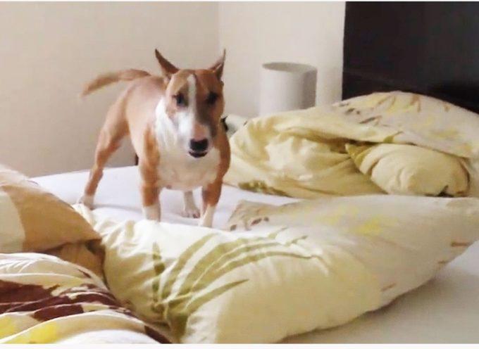Gli permettono di salire sul letto, ma forse non si aspettavano una reazione così