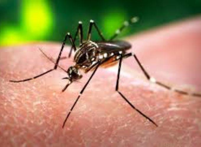 ZIKA: CHE LEGAME C'È TRA GLI OGM CON LA DIFFUSIONE DEL VIRUS?