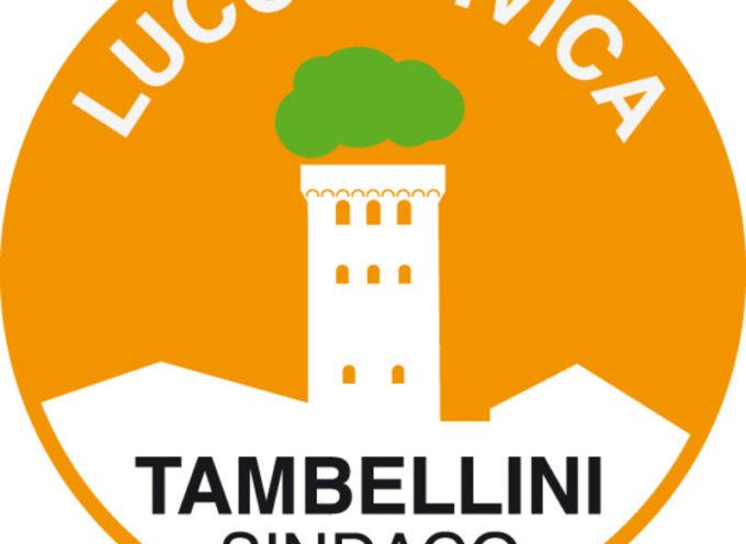 Su Tambellini. . . Francesco Colucci mette a crudo la realtà politica lucchese