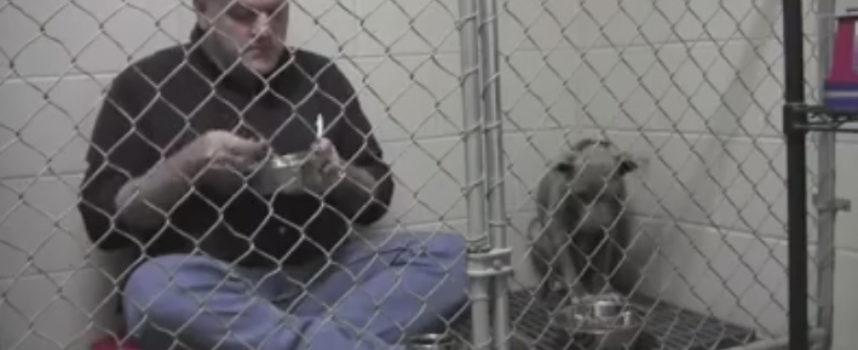 Mangia in gabbia insieme al pitbull malridotto per aiutarlo a rimettersi