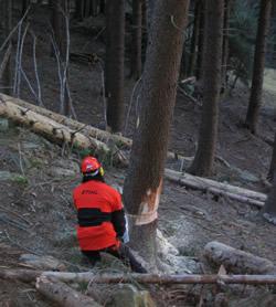 taglio-legna-nel-bosco