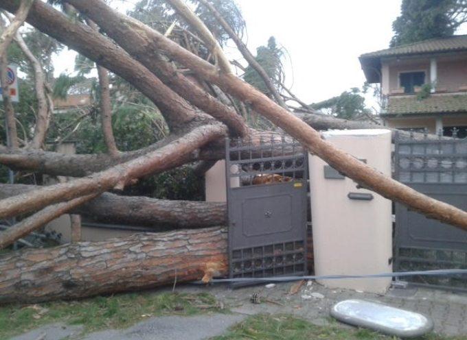 """""""5 marzo 2015 – 5 marzo 2016 La tempesta di vento un anno dopo:"""