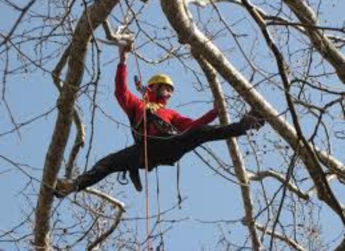 Corso sportivo di tree climbing a Bagni di Lucca