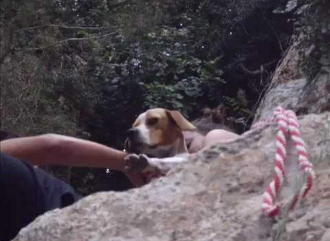 Un Cane Abbandonato In Un Burrone Vede I Suoi Salvatori: La Reazione è Commovente [VIDEO]