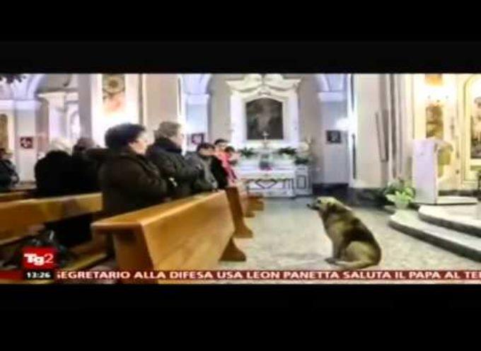 MUORE LA PADRONA, IL CANE TORNA IN CHIESA TUTTI I GIORNI[VIDEO]