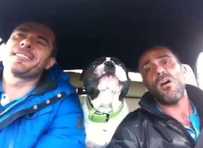 2 Uomini Cantano La Loro Canzone Preferita: Ciò Che Fa Il Cane Vi Lascerà Senza Parole![VIDEO]