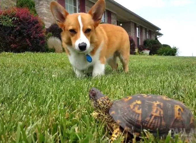 Poche Cose Al Mondo Possono Farci Ridere Come I Nostri Amici Cani: Guardate Qui![video]